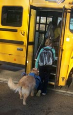Girl and assistance dog getting on school bus